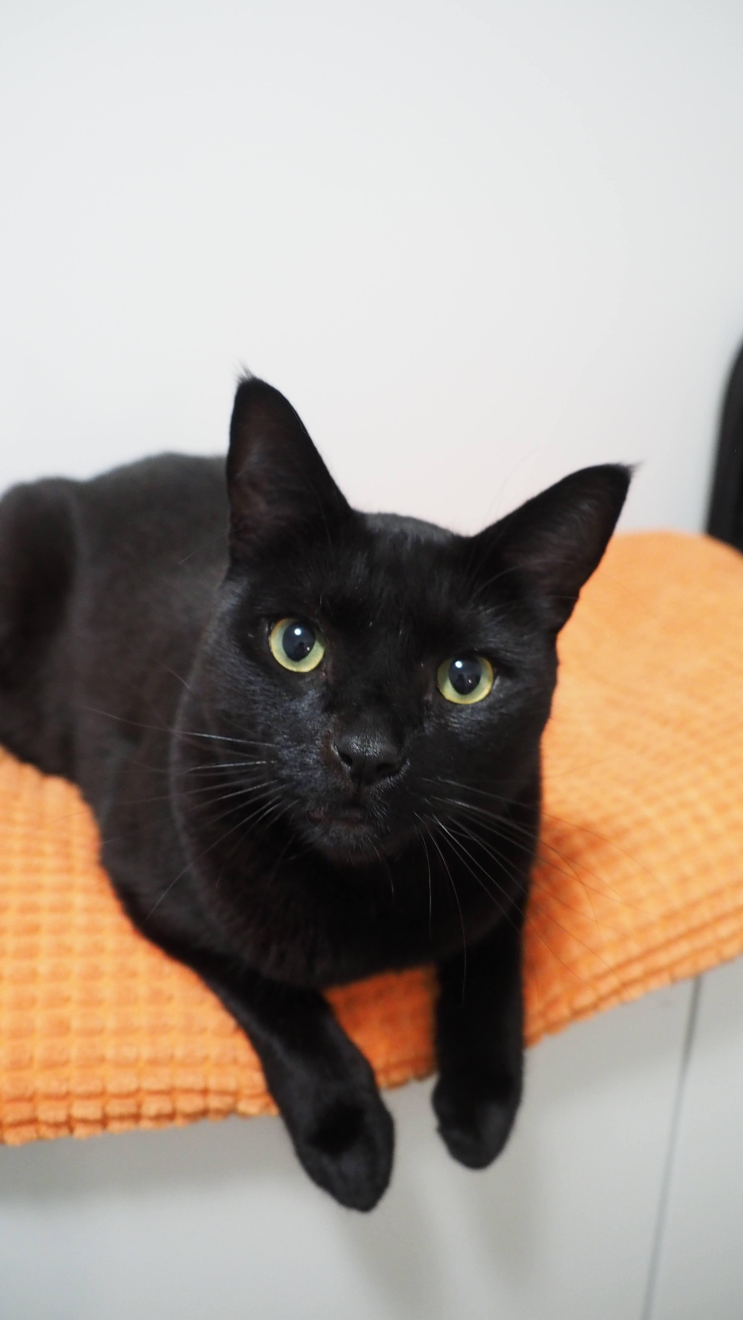 Black cat laying on an orange pillow.